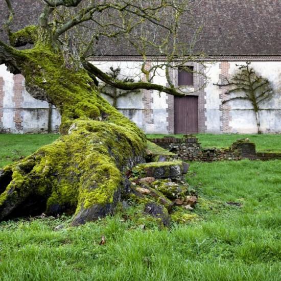 jardin-basse-cour